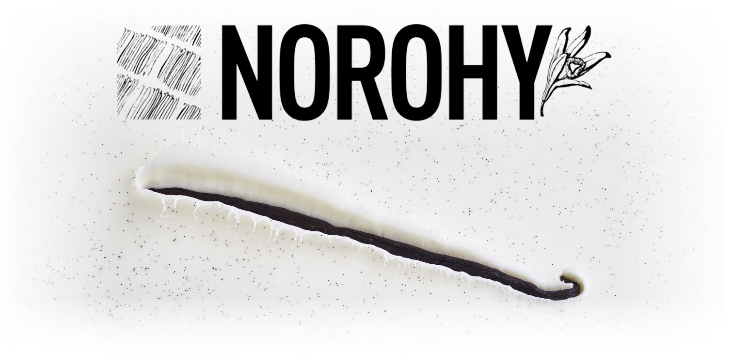 NOROHY VANILLA