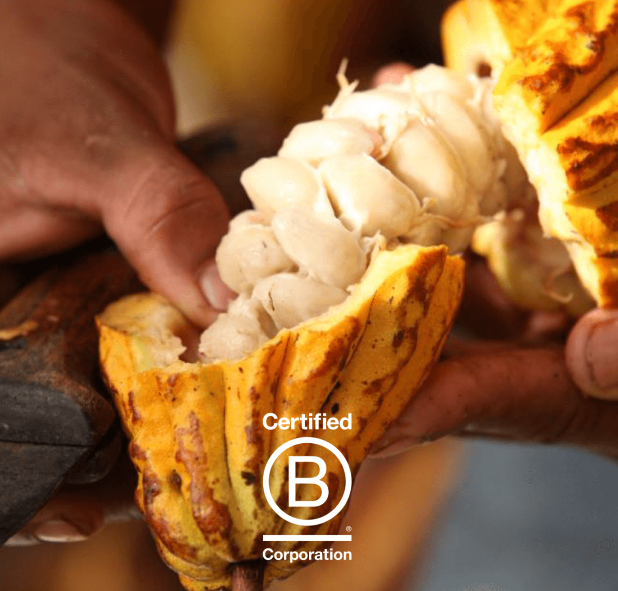 What makes Valrhona a B Corp