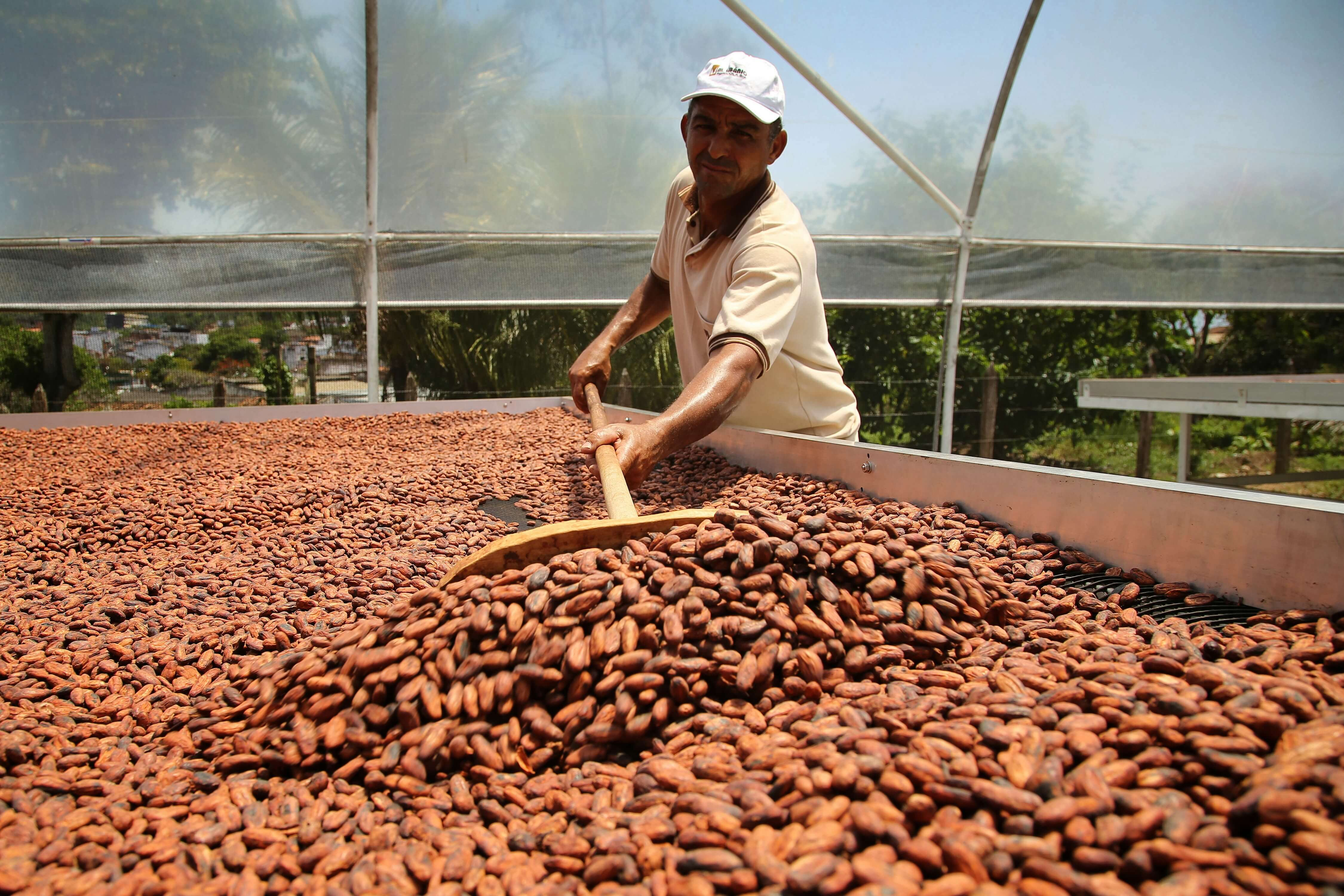 Challenges in the Cocoa Industry